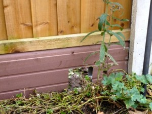 Hedgehog friendly fence panel allows free movement from garden to garden