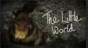 The Little World of a Red Mason bee