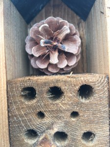 Solitary bee and earwig house!