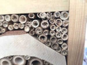 Solitary bee nest entrance How does it get inside? Nurturing Nature
