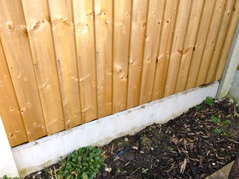 Hedgehogs And Garden Fences A Possible Solution