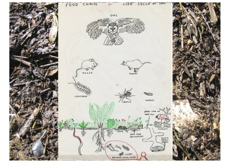 Soil life and food web jpeg