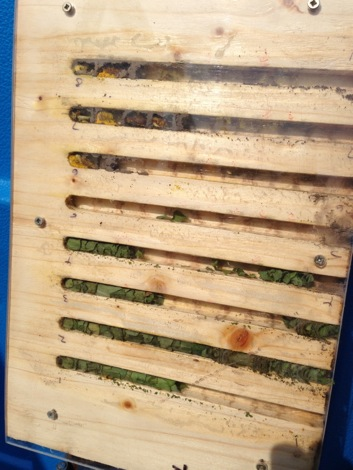 The 'cigar' style nest linings of a leaf cutter bee