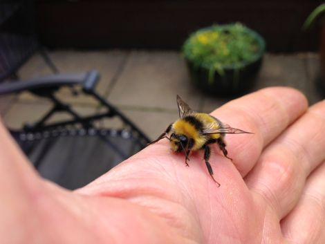 A bee in the hand....