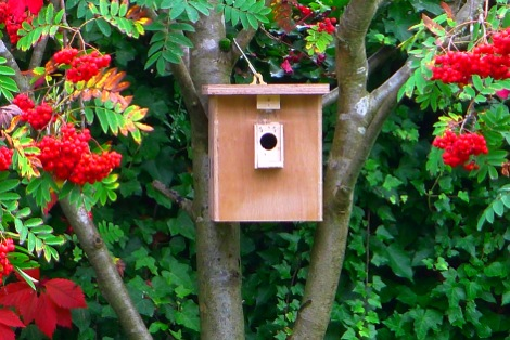 Bird bumblebee nest box