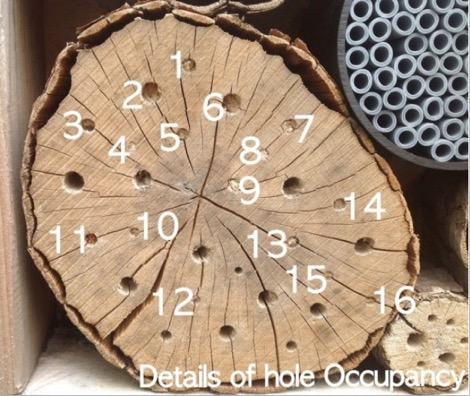 Beware Is Your Bee Hotel A Nursery For Disease And Pests Video