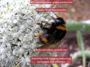Neonics effect on bumblebees Nurturing Nature