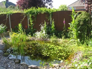 My 3rd garden wildlife pond