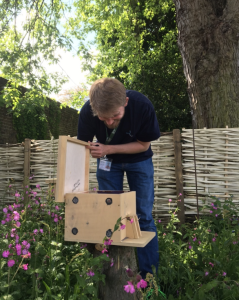 Bumblebee nest boxes used at Kew Gardens being examined by Dr. Koch